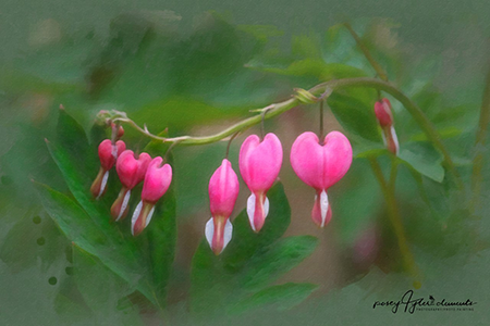 thumbnail_bleeding_heart_edited-1.png